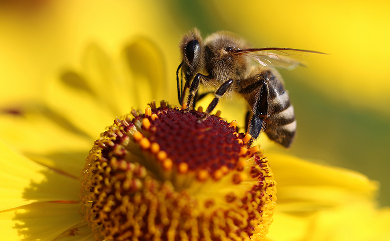 The World Bee Project, quando la natura incontra la tecnologia